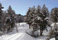 parco_nazionale_della_sila7